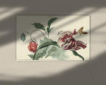 Tulpe und eine Mohnblume - Willem van Leen