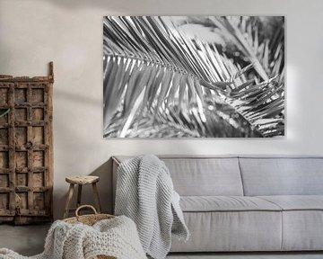 Details van een palmblad in zwart wit von Manon van Goethem