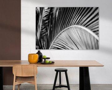 Close-Up van een palm blad in zwart wit von Manon van Goethem