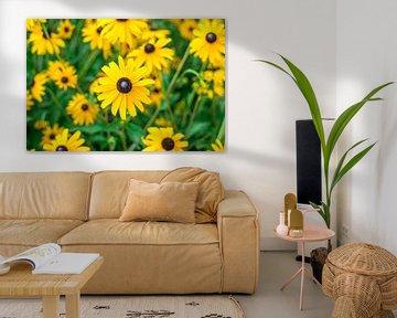 Close-up van een veld met gele bloemen. von Manon van Goethem