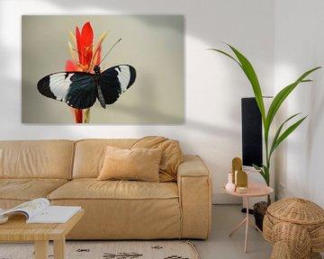 Black butterfly von Rene Mensen