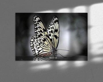 Vlinder in zwart wit von Rene Mensen