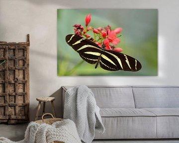 Zwart gele vlinder von Rene Mensen