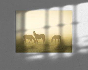 Pferde im Nebel von Roelof Nijholt