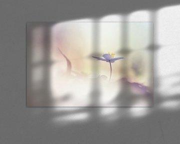 Sonnenschein von Bob Daalder