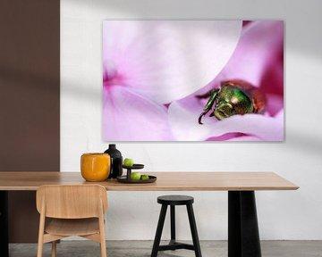 Käfer auf lila Blüte von Luis Boullosa