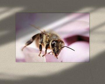 Biene auf lila Blume von Luis Boullosa