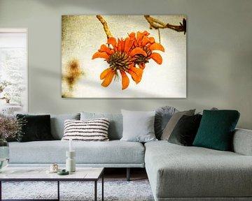 Orange Blume von Eric van den Berg