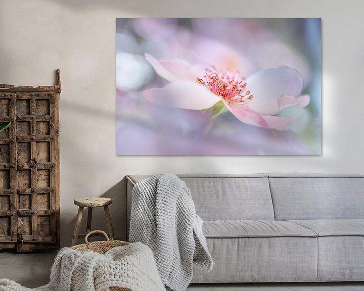 Sfeerimpressie: Dreamrose van Christl Deckx