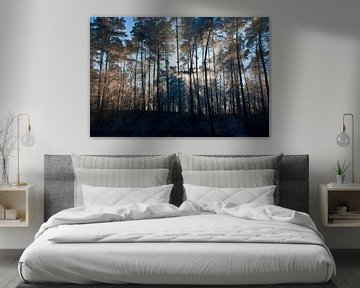 stralend bos van George Burggraaff