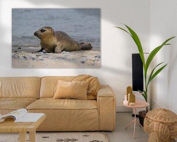 Seehund von Joost van Doorn