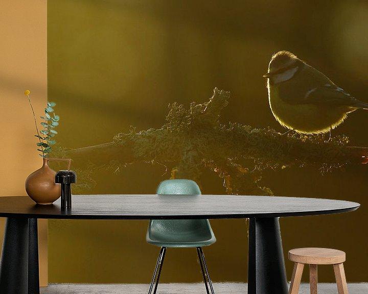 Sfeerimpressie behang: Pimpelmees in de zon. van Alex Roetemeijer