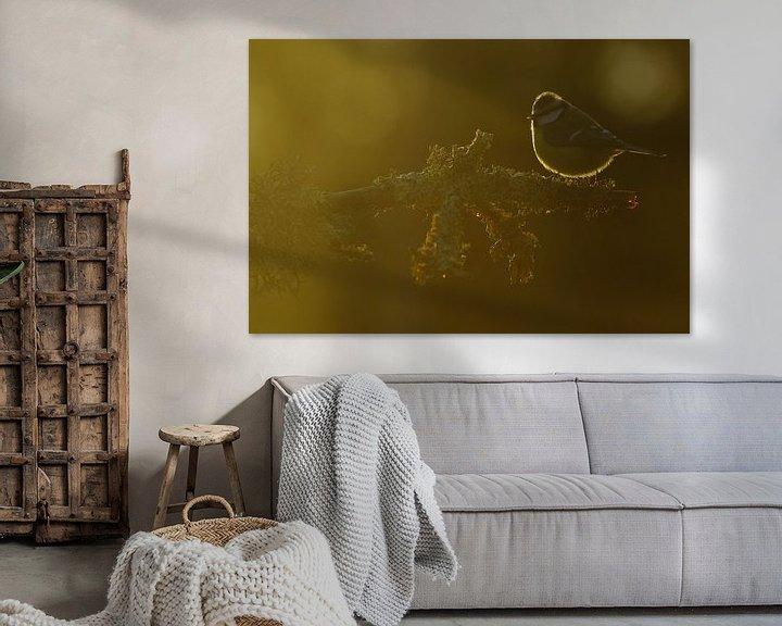 Sfeerimpressie: Pimpelmees in de zon. van Alex Roetemeijer
