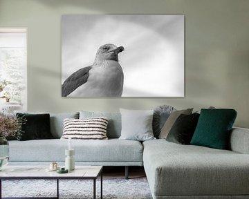 Porträt der Möwe von Luis Boullosa