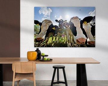 koeien van George Burggraaff