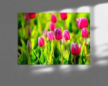 Paarse tulpen von Sjoerd van der Wal