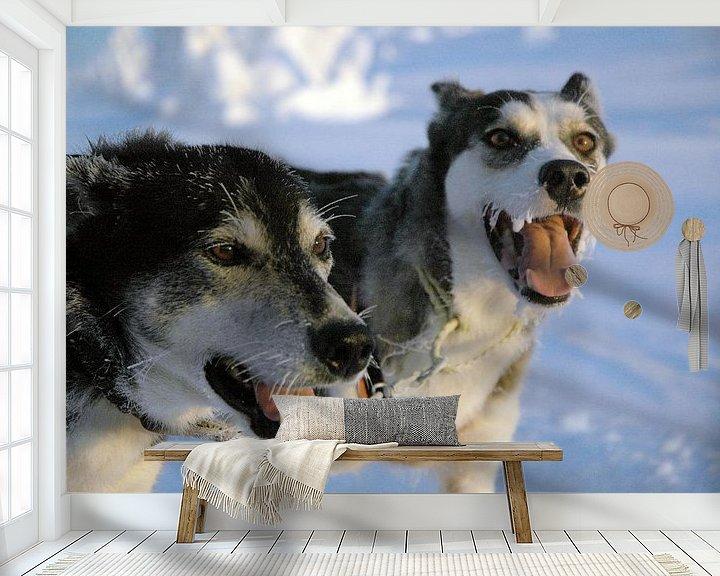 Sfeerimpressie behang: Blaffende honden bijten niet - Zweedse sledehonden van Barbara Koppe