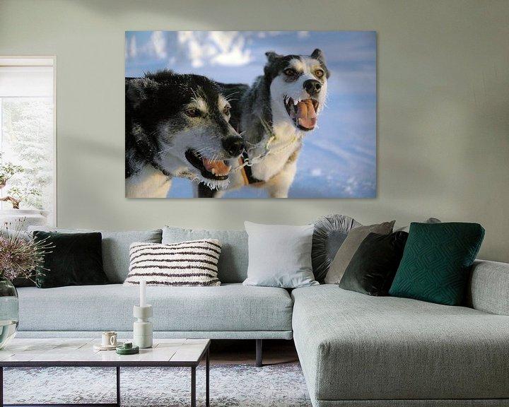 Sfeerimpressie: Blaffende honden bijten niet - Zweedse sledehonden van Barbara Koppe