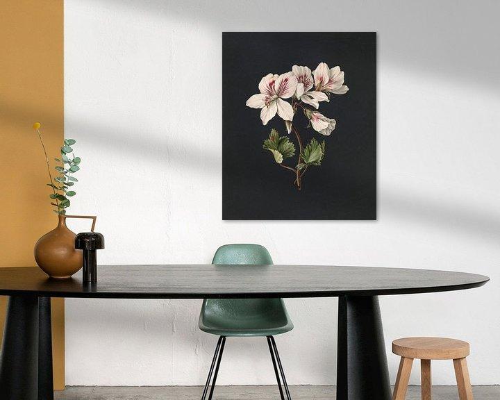 Sfeerimpressie: Pelargonium album bicolor, M. de Gijselaar