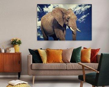 Elefanten Portrait von Angela Dölling