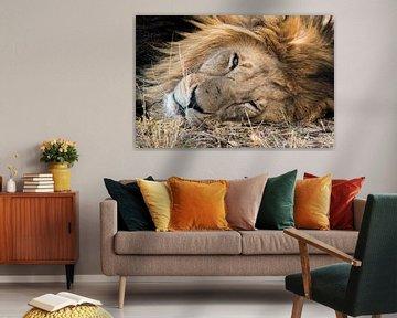 Portrait de lion mâle dans le HESC sur Kees Molenaar