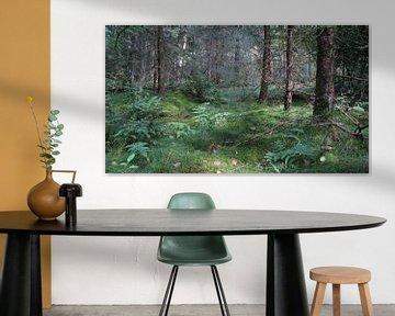 Bosgrond  van Laura Marienus