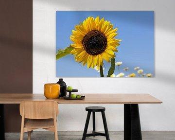 Zonnebloem met blauwe lucht von W J Kok