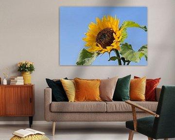 Zonnebloem met blauwe achtergrond von W J Kok