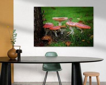 op een rode paddenstoel..  van Marianne Bras