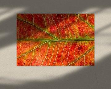 Rood hersftblad met groene nerven van Michel Vedder Photography