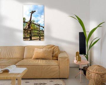 Giraffe / Girafe von melissa demeunier