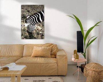 Zebra / Zèbre / sur melissa demeunier
