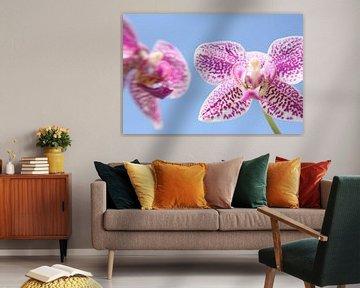 Orchidee van Jaap de Wit