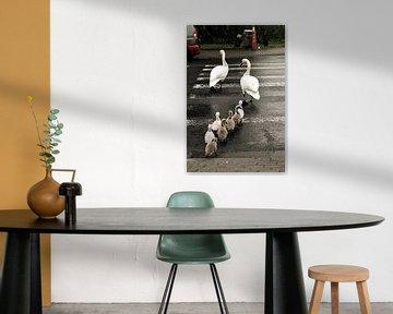 family Swan / famille cygne / familie Zwaan von melissa demeunier