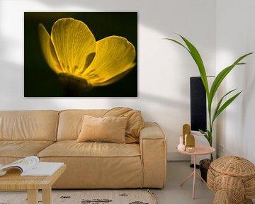 Doorschijnende gele boterbloem von Karin vd Waal