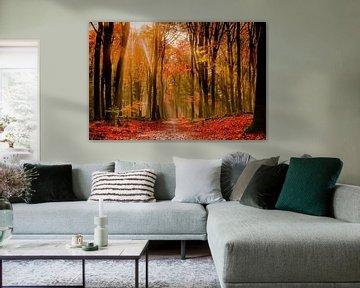 Herbstwald von Jeannette Bouwmeester