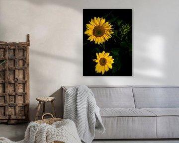 Zonnebloemen von schylge foto