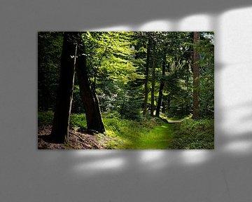 Path Covered by Grass - 2017 von Timmy Bouwmann
