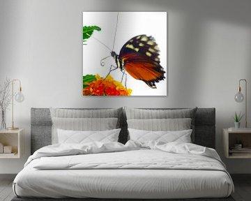 Vlinderkasvlinder1 von Sybren Visser