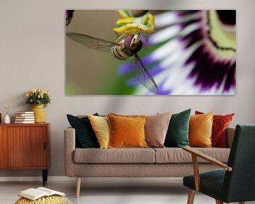 Zweefvlieg en passiebloem van Sybren Visser