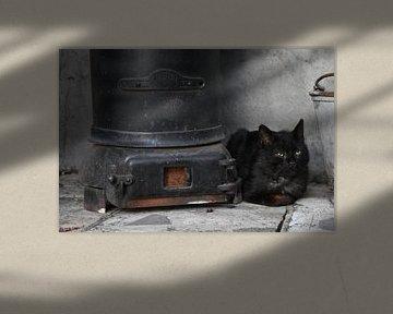 Zwarte kat bij zwarte kachel op black friday von Gonnie van Hove