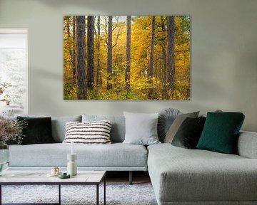 Bomen in de herfst sur Margreet Frowijn