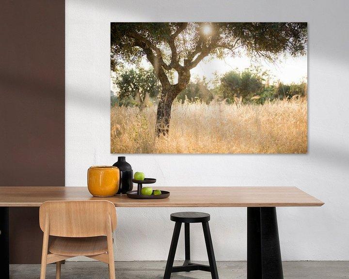 Sfeerimpressie: Zon door olijfboom van Ellis Peeters