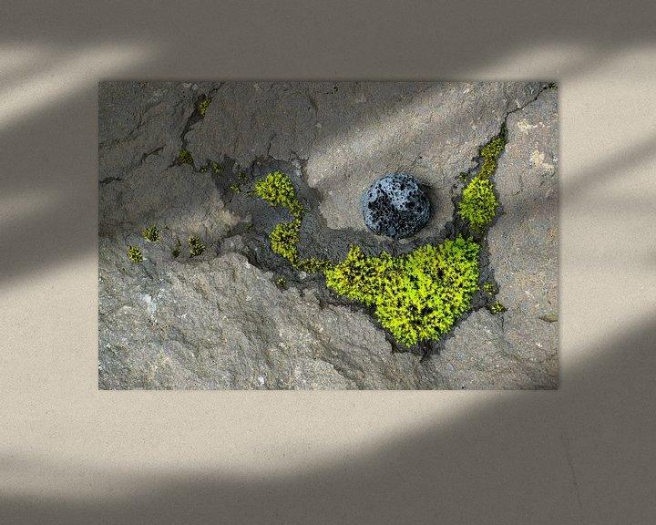 Sfeerimpressie: Mossy constellation van John Been