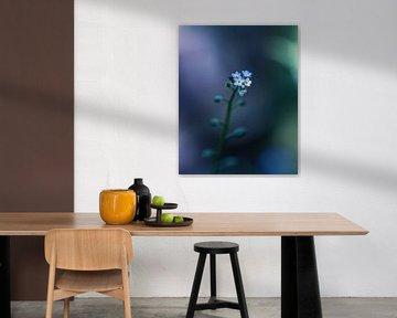 Vergiss diese Blume nicht! von Niels Tichelaar