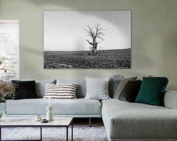A Dead Tree von Jack Turner