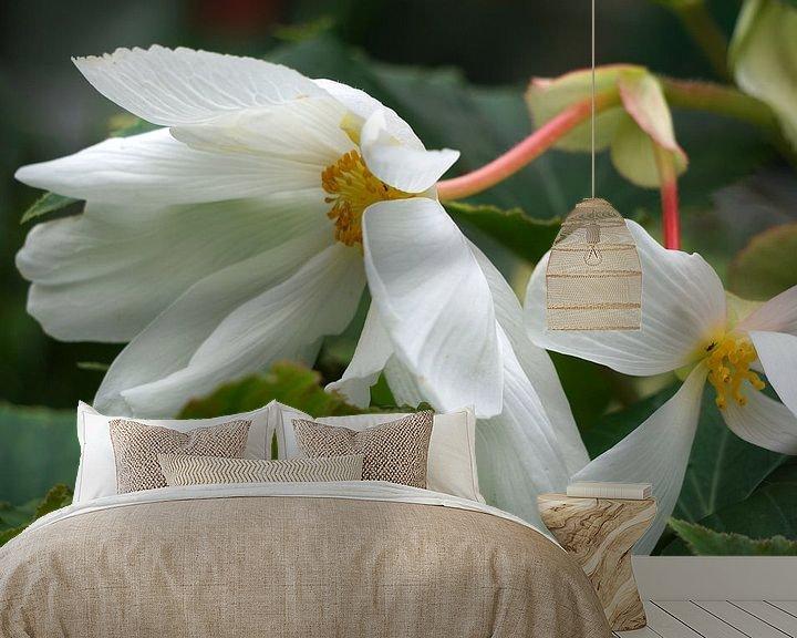 Sfeerimpressie behang: Begonia van Ineke Klaassen
