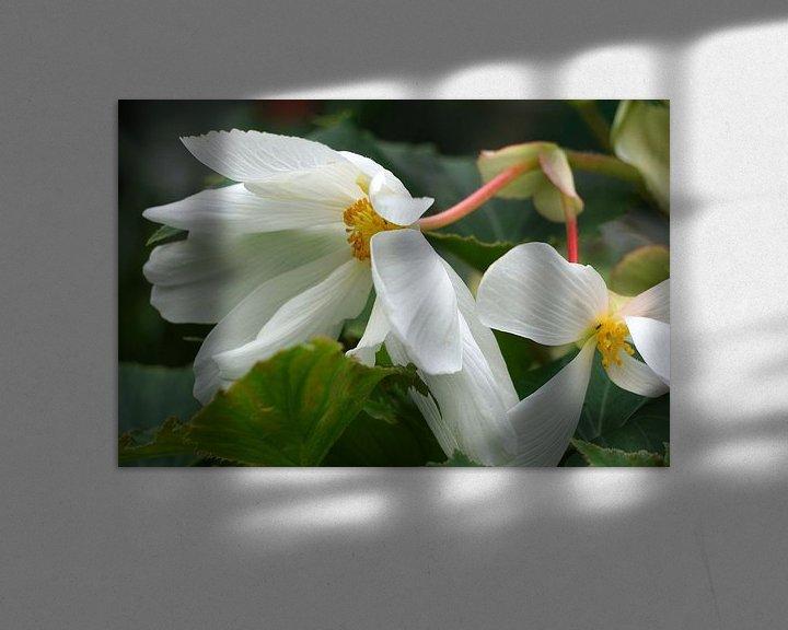 Sfeerimpressie: Begonia van Ineke Klaassen