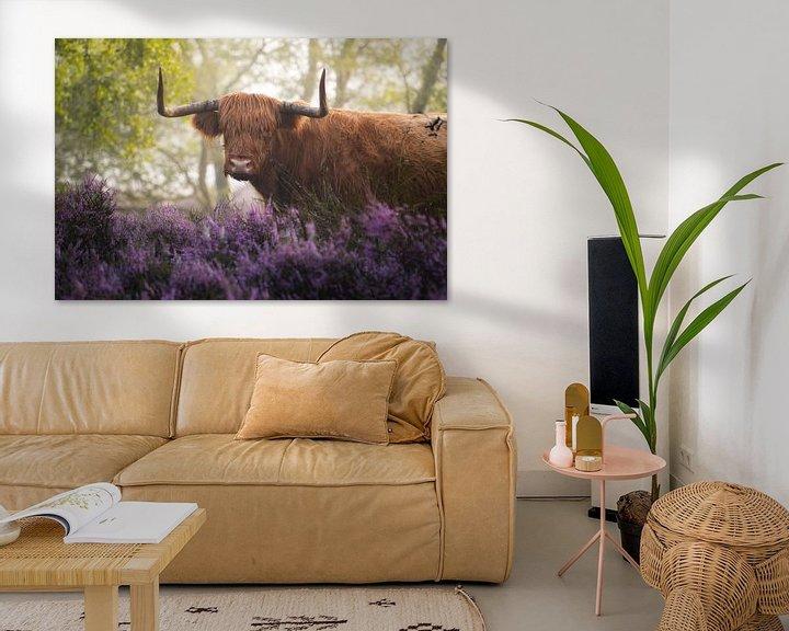 Sfeerimpressie: Schotse Hooglander met Paarse Heide van Albert Dros