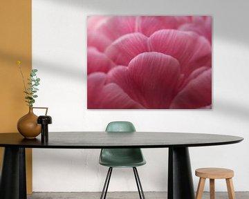 Roze  van Wendy Drent